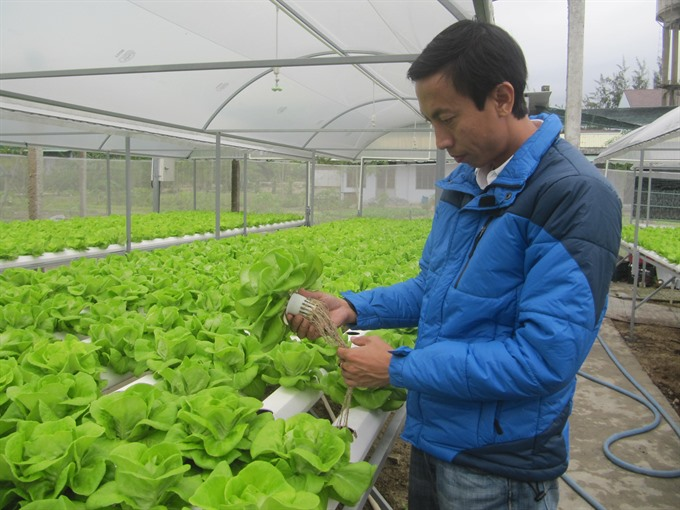 A start-up farming project using hi-tech methods developed in Đà Nẵng. The city started its start-up programme in 2016. — VNS Photo Công Thành